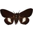 Tabwecala robinsoni gen. nov., sp. nov., ...