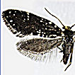 The first discovery of the genus <i>Narycia</i> (Lepidoptera, Psychidae) from Japan, with description of a new species