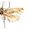 Examination of the Scythrididae in the Bruand d'Uzelle collection: faunistic and taxonomic implications for the genus <i>Scythris</i> (Lepidoptera, Scythrididae)